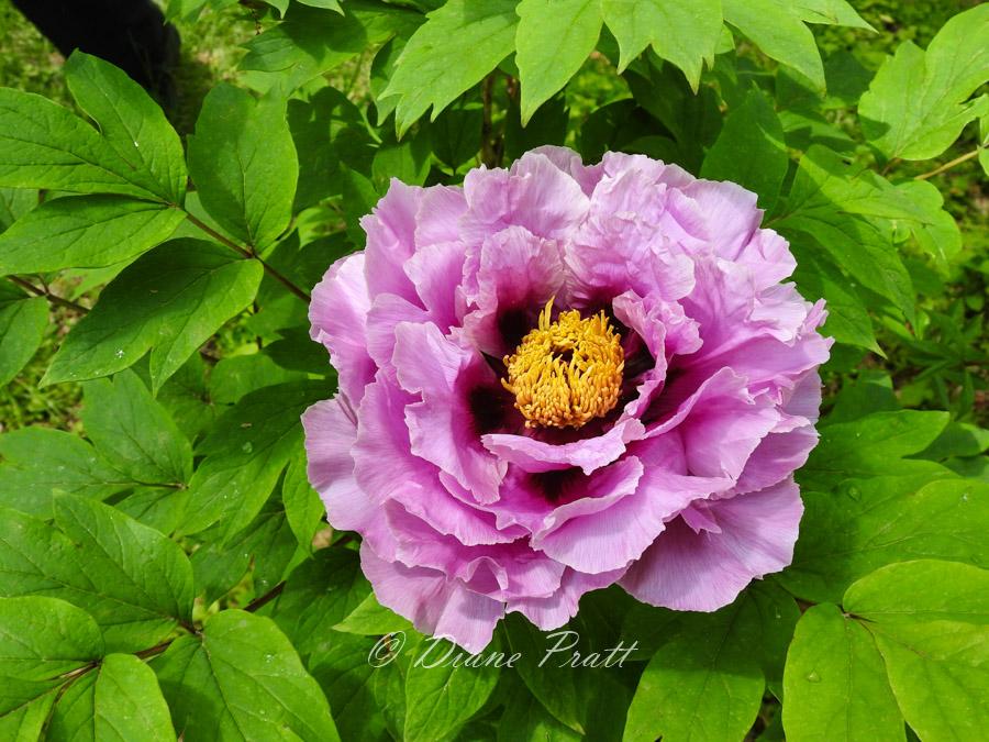 flower photographs