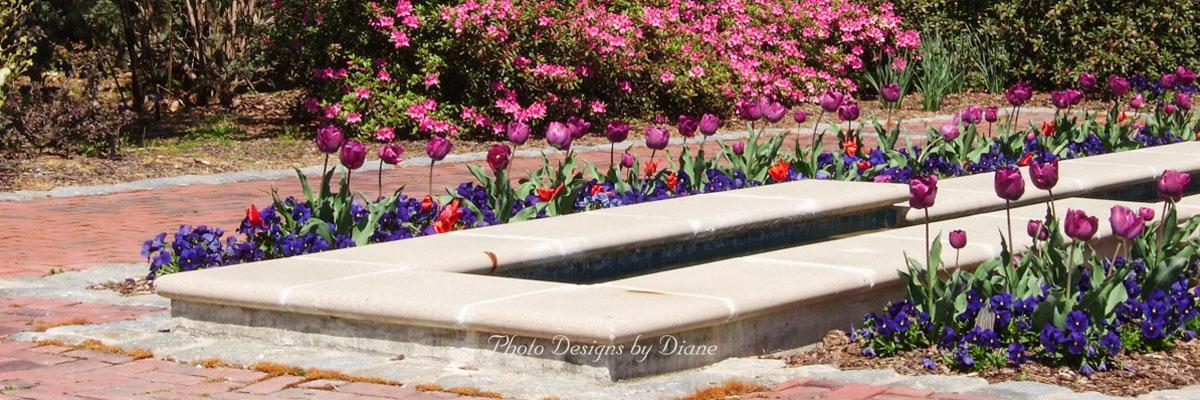 Photo Designs By Diane - Border Gardens