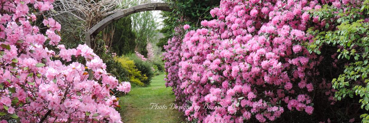 Photo Designs By Diane - Gardens